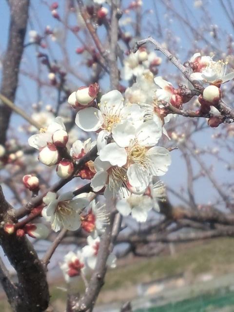 匂い立つ花.jpg
